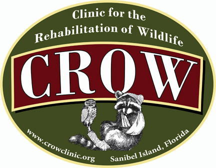 Wildlife Rescue 101