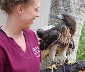 Patient Profiles: Birds of Prey