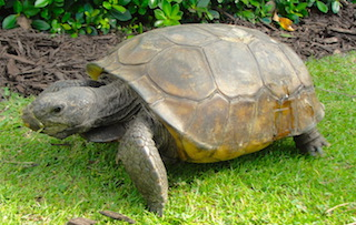 Patient Profiles: Gopher Tortoises