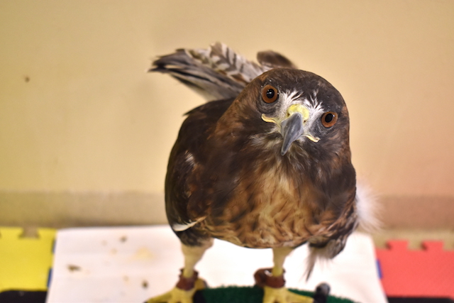 Patient Profiles: Birds of Prey