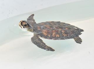 Patient Profiles: Sea Turtles