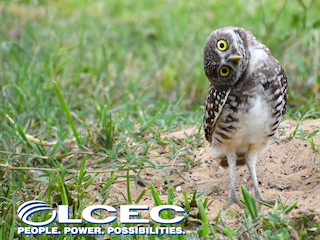 Speaker Series presented by LCEC: Living with Burrowing Owls
