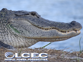 Speaker Series presented by LCEC: Gatorama: Fast Hands or No Hands!