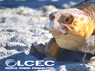Speaker Series presented by LCEC: Sea Turtles of Southwest Florida