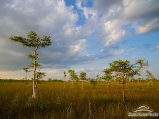 Speaker Series presented by LCEC: Finding the Path to a Sustainably Wild Florida