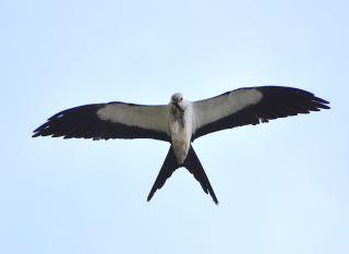 Speaker Series presented by LCEC: Conservation of Sanibel Migratory Birds
