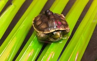 Turtles, Terrapins, and Tortoises