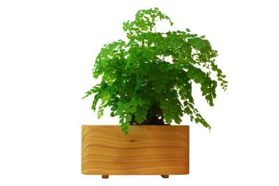 Cedar Planter Cedar, Medium