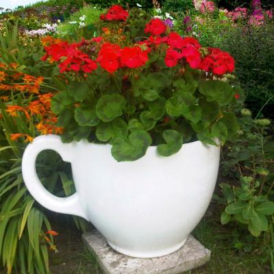 Tea Cup Planter