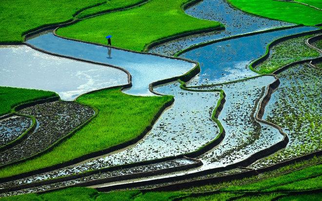Ruộng bậc thang Việt Nam vào top cảnh quan siêu thực