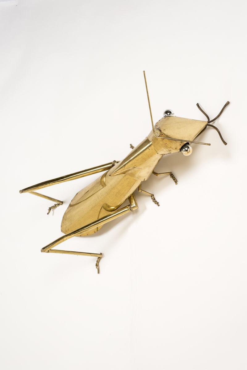 Vincent Darré Insecte
