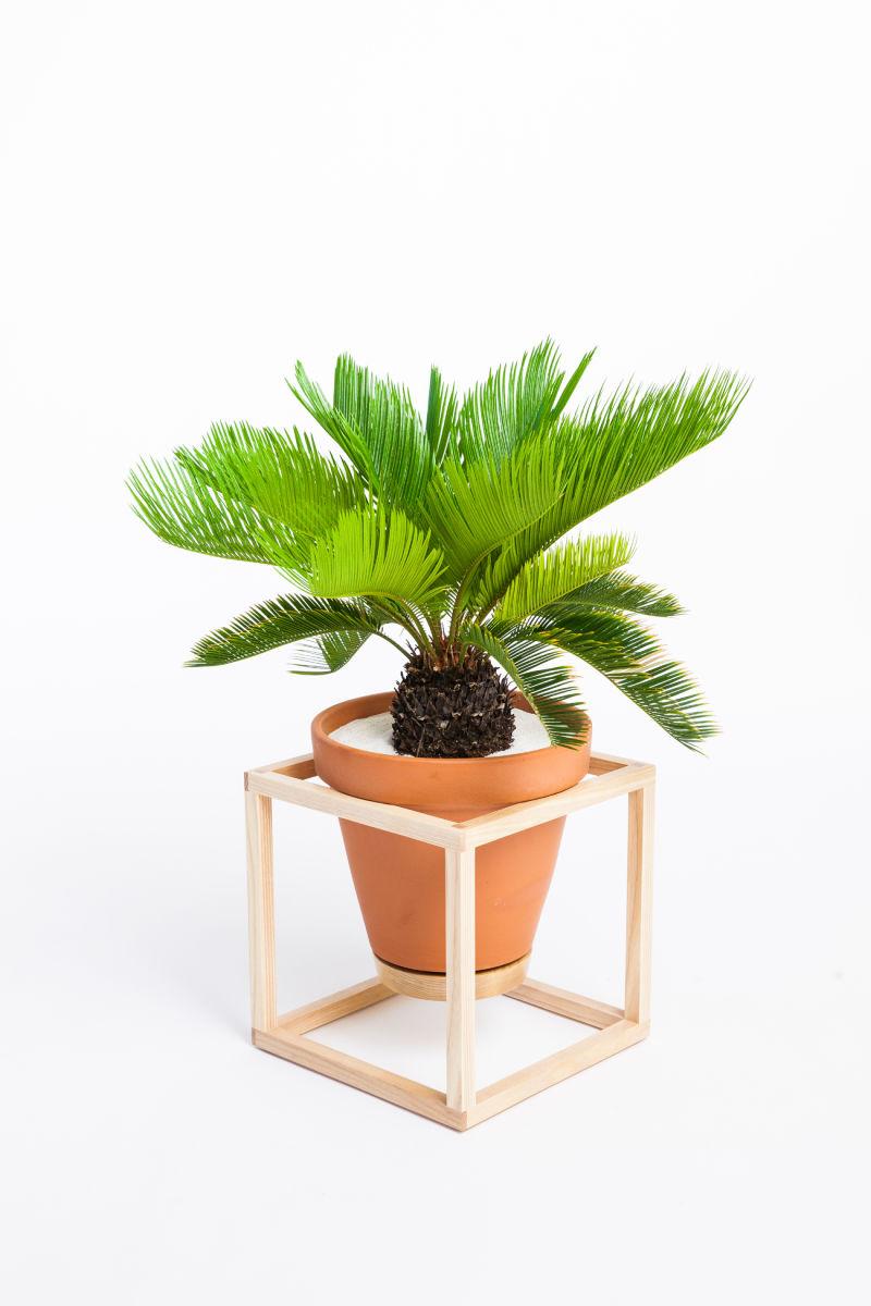 The Frame Planter – Cube