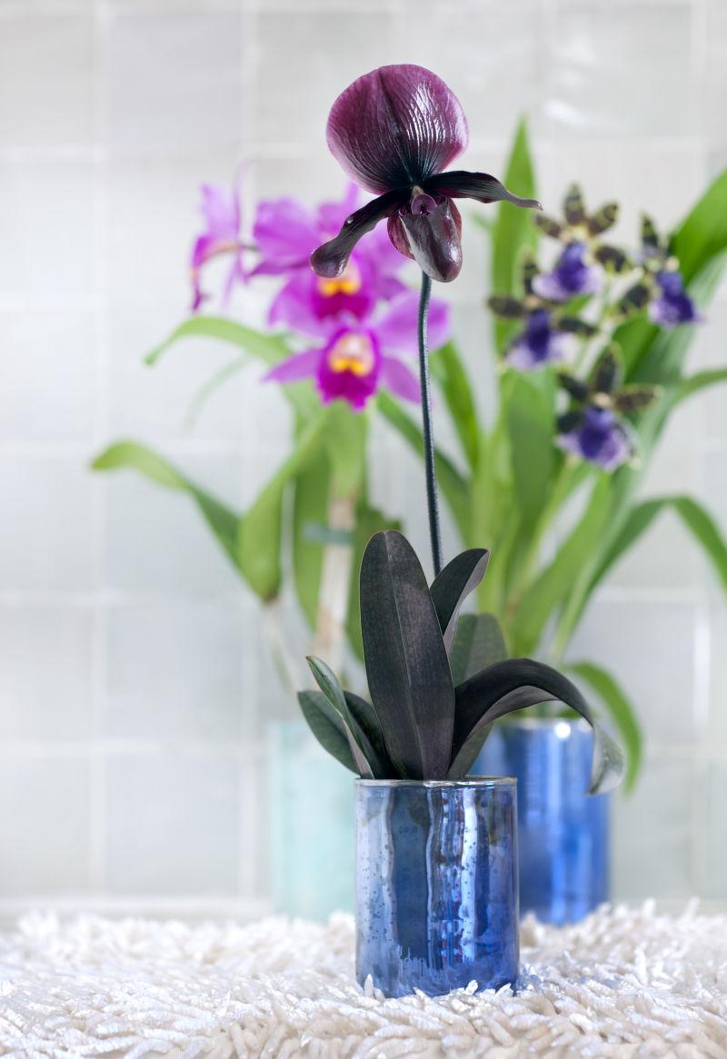 Orchidee_5