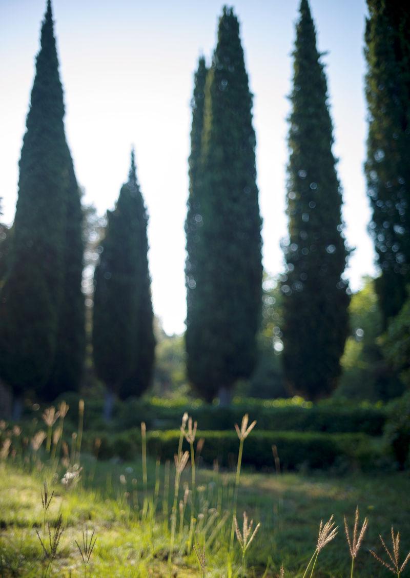 Garten des Château de la Colle Noire