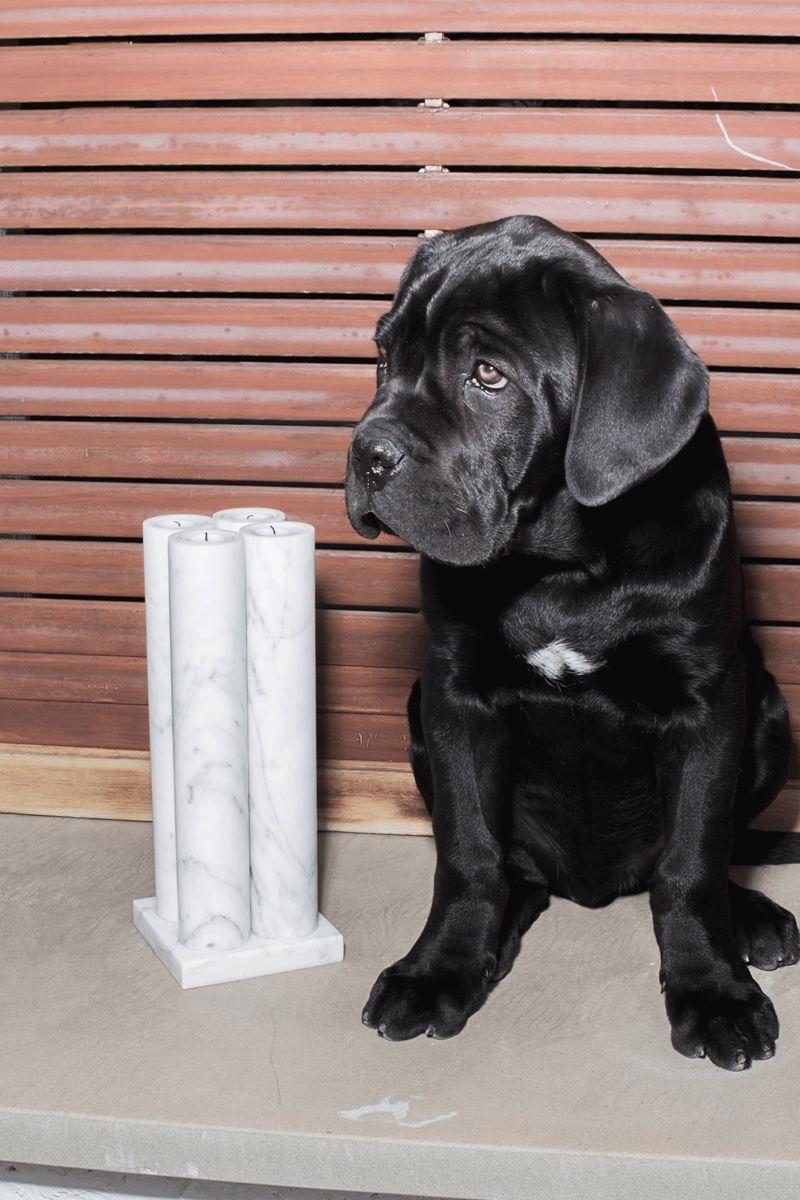 Bloc Studios Hund