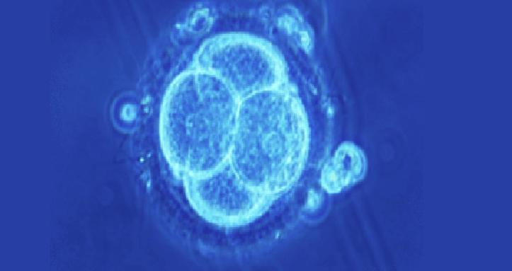 Nutrologia: Como estimular nossas Células-Tronco Endógenas