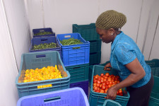 ColdHubs solar-powered cold storage rooms can hold 2 t of perishable farm produce. © ColdHubs Limited