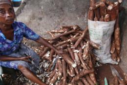 Des plants de manioc, au Nigeria. © Sunday Alamba/AP/SIPA