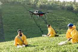 A drone hovers over tea pickers in Uganda. © Seth Carnill