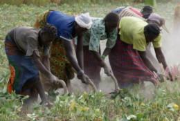 L'agriculture reste le premier contributeur au PIB burkinabé. Ici à proximité de Bobo Dioulasso. © Javier Mármol / CC / Flickr