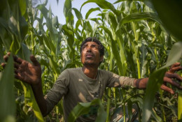 The developing world can leapfrog the West to food security, but it will take a digital revolution. © CISSA-MI_Barisal / Climate Change, Agriculture and Food Security