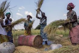 Dans les pays en développement et émergents, la question de favoriser la transition des emplois informels aux emplois formels, en particulier parmi les femmes rurales du secteur agricole, reste non résolue. © DR.