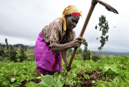 FAO and Rabobank renew partnership to help smallholders participate in agribusiness boom