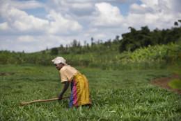 Ferme urbaine au Rwanda. En Afrique, les femmes constituent la majorité des agriculteurs urbains. © International Potatoe Center Sub Saharian Africa, CC BY-SA