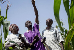 Farmers share information on climate received via SMS © Panos