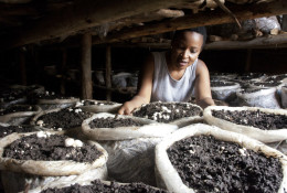 Former reality show contestant Leah Wangari inspects the mushrooms she is growing in her small mud hut in Kiambu, near the capital Nairobi, in Kenya on Jan. 17, 2018. An unusual new reality TV show backed by the United States government is the first of its kind in Africa, training young adults from Kenya and neighboring Tanzania in farming. © Sayyid Abdul Azim