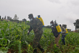 Rwanda Defence Force have been instrumental in the fight against the destructive fall armyworm.