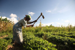 A woman harvests groundnuts in Malawi. Land ownership does not automatically empower women. © ILRI/Flickr, CC BY-NC-SA