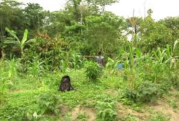 Marie-Thérèse TANOH, étudiante en master 2 en économie générale, se lance parallèlement dans la culture du manioc et de légumes. © Agribusiness TV