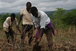 Des agriculteurs au Malawi. © Find Your Feet/Flickr