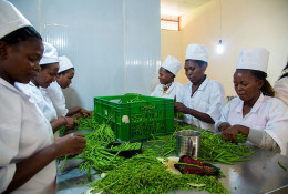 Workers at Proxifresh sort French beans for export. © Faustin Niyigena