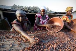Des femmes appartenant à une association de producteurs de cacao appelée BLAYEYA répandent des fèves de cacao pour les sécher, à Djangobo, Niable dans l'est de la Côte d'Ivoire, le 17 novembre 2014. © Reuters