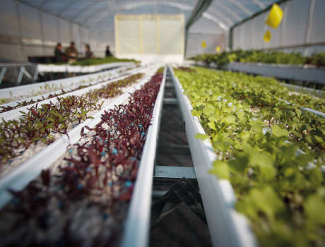 Using 97% less water than traditional agriculture, hydroponics uses nutrient solutions specifically designed for each crop's needs © P. DE MELO MOREIRA/AFP/Getty Images