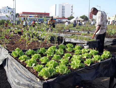 Market gardens provide essential food for urban families with access to small plots of land and often yield surplus produce that can be sold for additional income © Jerry Miner/GlobalHort