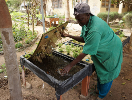 Coumba Diop is a gardener and trainer at one of the 12 micro-garden training centres in Dakar © Aurélie Fontaine