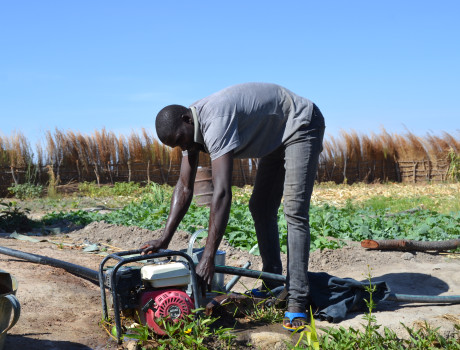 Young Zambian farmers are able to harvest crops throughout the year with motorised water pumps provided by the Young Farmers' Clubs and Hubs project © DAPP