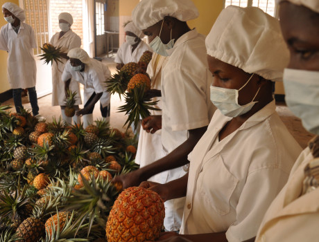 Tuzamurane cooperative's processing unit enables it to supply dried organic pineapples to countries across Africa © Aimable Twahirwa