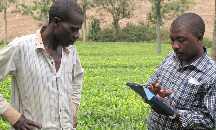 Igara Growers Tea Factory Ltd in Uganda has implemented a geo-referencing and farm mapping initiative to profile its farmer members © Charlie Pye-Smith