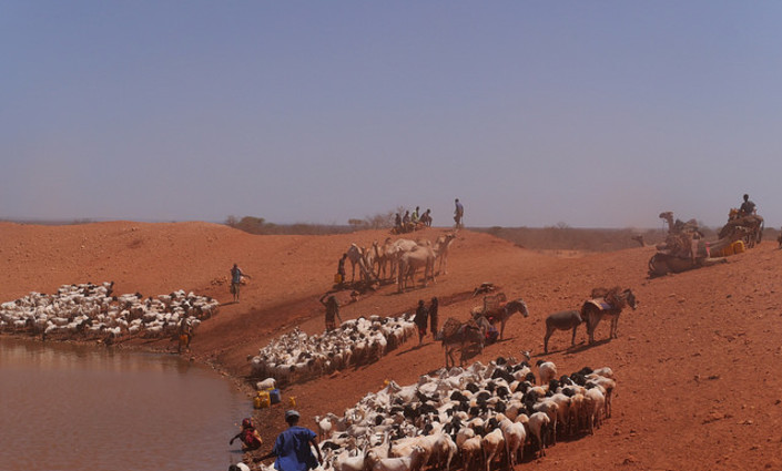 The pastoralists of Ethiopia's Somali region make a living raising cattle, camels and goats in an arid and drought-prone land. They are forced to move constantly in search of pasture and watering holes for their animals. Ahead of COP 24, African experts have identified the need to speak with one unified voice, saying a shift in the geopolitical landscape threatens climate negotiations. © William Lloyd-George/IPS