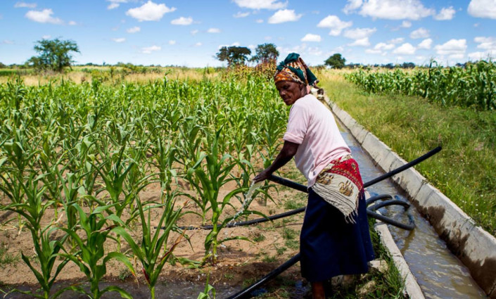 A farmer uses the Silalatshani Irrigation Scheme in Zimbabwe © Andre Van Rooyen/ICRISAT