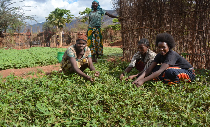Indigenous vegetables are key to improving food security and income generation in Africa © CABI