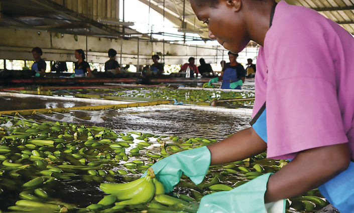 Packing plants in a factory in West Africa © Flickr/J. Nimmo