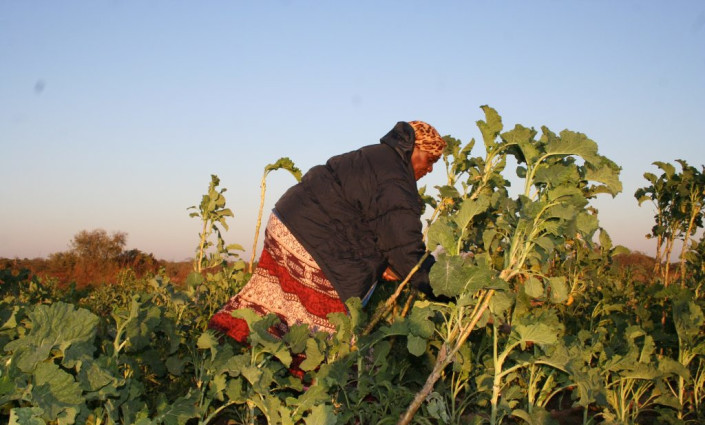 Urban farmer, Elizabeth Tshuma in her horticulture plot, at Hyde Park outside Bulawayo, Zimbabwe. Many say women entrepreneurs face more challenges in getting their foot in the door in agricultural business than men. © Busani Bafana/IPS