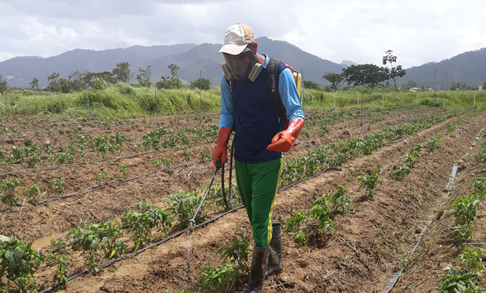 With judicious pesticide use and adoption of integrated pest management measures, along with other good agricultural practices, certified farmers are improving crop quality and yields. © NAMDEVCO