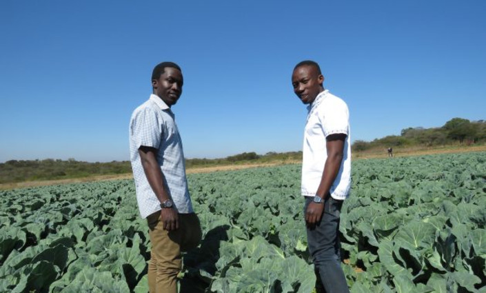 Young farmers and brothers Prosper and Prince Chikwara are using precision farming techniques at their horticulture farm, outside Bulawayo, Zimbabwe. © Busani Bafana/ IPS