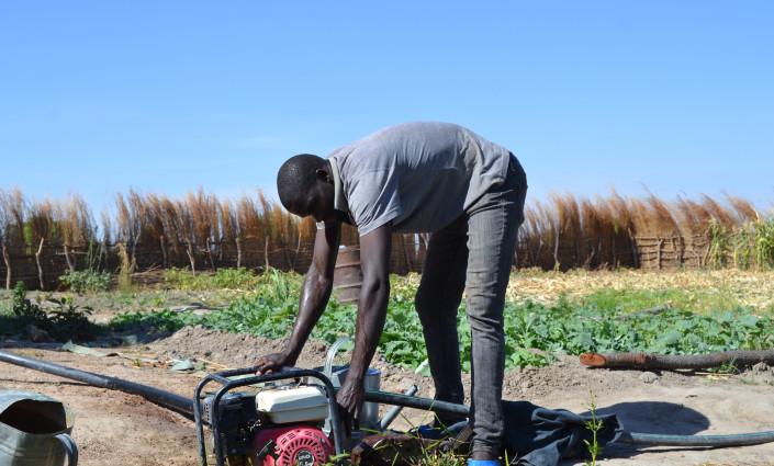 """Grâce aux pompes à eau motorisées fournies par le projet """"Young Farmers' Clubs and Hubs"""", les jeunes agriculteurs zambiens peuvent cultiver toute l'année. © DAPP"""